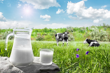 Glass jug with milk and a glass on the grass against a backdrop of picturesque green meadows with flowers at clear sunny summer day. Fresh organic milk. Beautiful blue sky. A herd of cows in field.