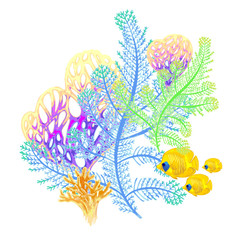 Composition with coral and fish on a white background.