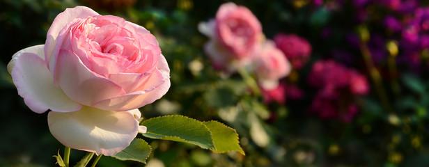 Blumen 594