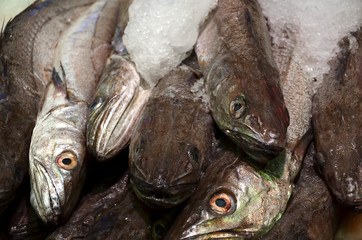 fresh mackerel fish on ice market detail photography