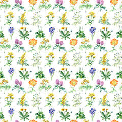 Collection of hand drawn medical herbs and plants. seamless pattern