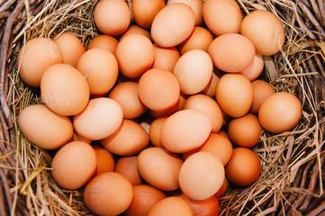 Brown egg background