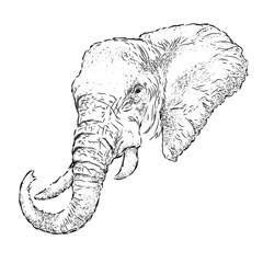 Hand draw elephant portrait. Hand draw vector illustration