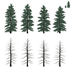 mature firs set in flat colors
