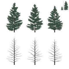 young firs set in flat colors