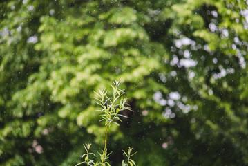 plants under sweet rain