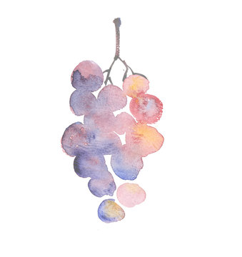 rosy grape watercolor sketch. hand drawn wine bunch of grapes