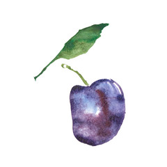 Plum, damson, prune were created with watercolor paint, high-quality paper textures. You may use it for creation a pack, label, illustrations of seasonal festival, flyer, poster, background, card.