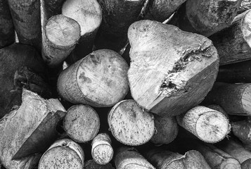 Cutted woods. Black and white photo
