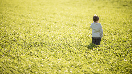 Toddler boy standing in the middle of high green grass