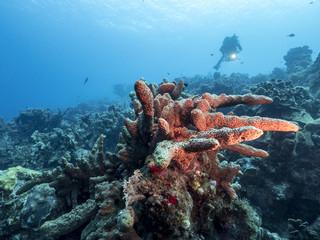 Unterwasser - Riff - Koralle - Schwamm - Tauchen - Curacao - Karibik - 4K