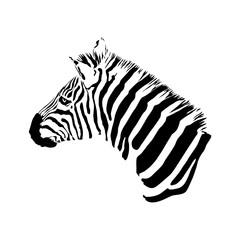black and white zebra head, isolated animal vector illustration