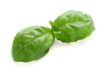 Fresh basil leaves on white background
