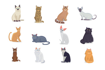 Collection Cats of Different Breeds. Vector isolated cats on white background