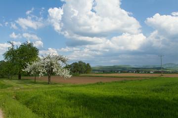 Obstbaum