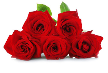 Five red roses on white background