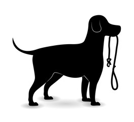 Pet design illustration