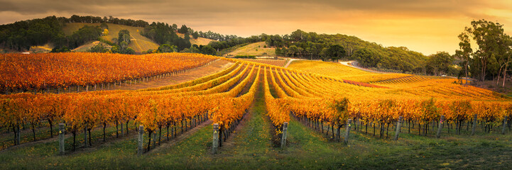 Fond de hotte en verre imprimé Vignoble Gorgeous Vineyard in the Adelaide Hills