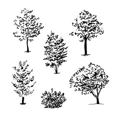 Set of isolated hand drawn tree sketches