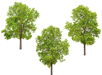 collection of tree isolated on a white background