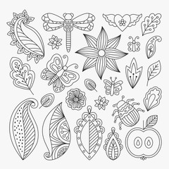 Vector floral set with leaves and herbs, bugs and butterflies. Summer theme elements for invitation, wedding or greeting cards