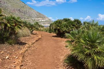 Dwarf palms along path in the Zingaro Nature Reserve - Trapani