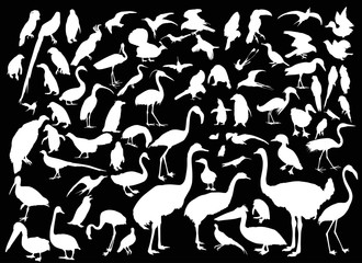 large set of different bird silhouettes on black