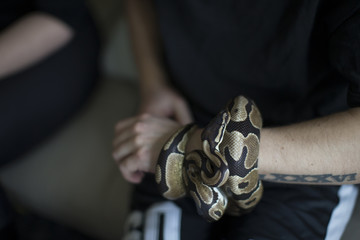Young Man Holding Pet Snake At Home