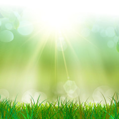 Green and fresh grass in the sun light