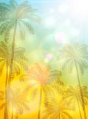 Palms on sunny background