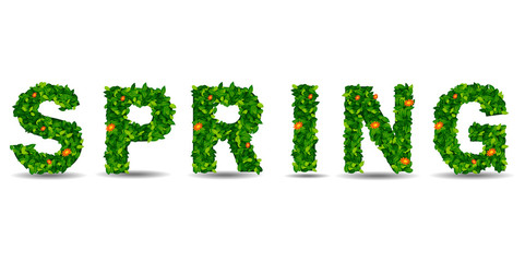 Text of the spring green leaf. 3d render. in white background