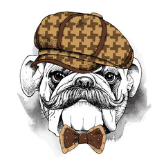 The poster with the image of the dog Bulldog with a mustache in the cap and bow. Vector illustration.