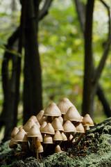 funghi nati nel sottobosco