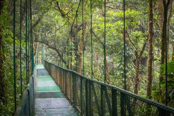Wiszący most w dżungli / Krajobraz