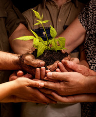 farmers family hands holding a fresh young plant