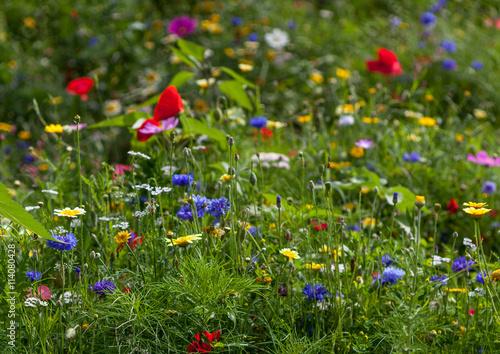 Fleurs de jach re - Fleur de jachere ...