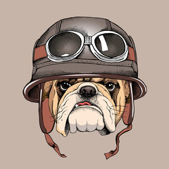Bulldog portrait in a retro helmet of Racer. Vector illustration.