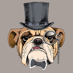 Bulldog portrait in a bowler hat, with a tie and with a monocle. Vector illustration.