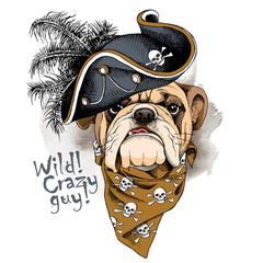 Bulldog portrait in a Pirates Hat and with neckerchief. Vector illustration.