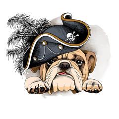 Bulldog portrait in a Pirates Hat. Vector illustration.
