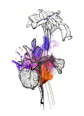 Handmade irises illustration. Black and silver outline on purple and orange watercolor splash, 3d effect. Isolated on white background. Fabric texture. Template for scrapbook.
