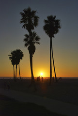 Break dancers silhouetted by setting sun under palms on Venice Beach, Los Angeles, U.S.A.
