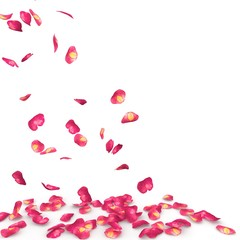 Rose petals speckled fall on the floor