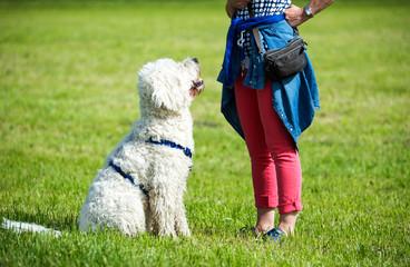 Hundeschule, Hundeerziehung