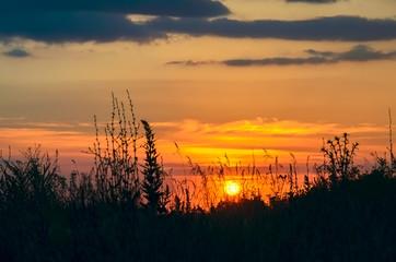 Wild grass against a rising sun.