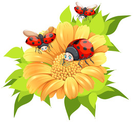 Ladybugs flying around yellow flower