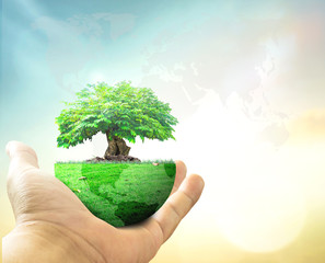 World environment day concept: Human hand holding big tree with earth globe of grass