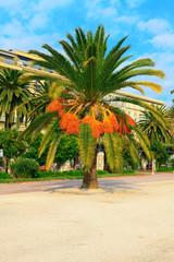 Beautiful big green palm tree in Nice