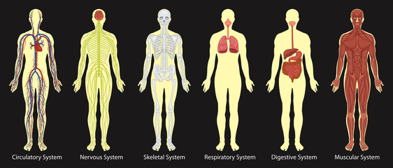 Diagram of systems in human body