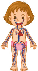 Blood systems in little girl body